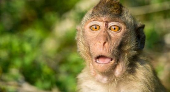 We zijn trots op onze nieuwe titels als een aap met zeven lullen