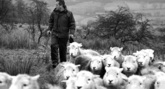 James Rebanks verovert ook Nederland met zijn schapen